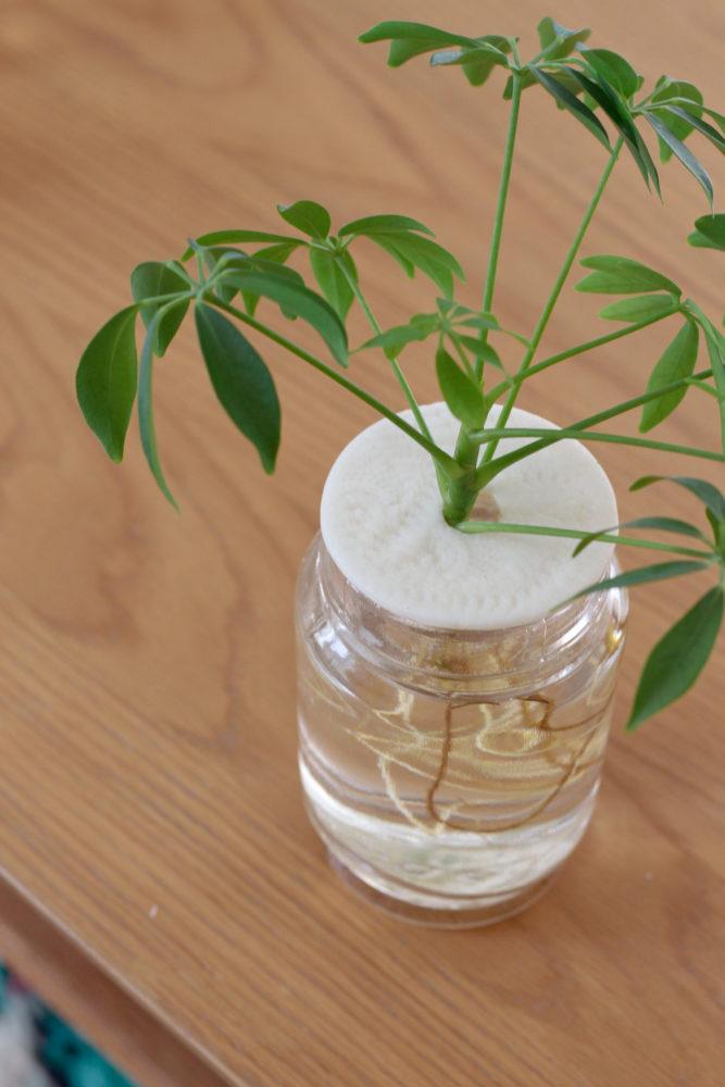 DIY supports à boutures en pâte fimo