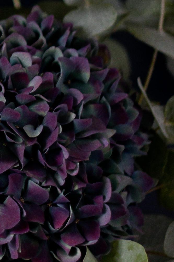 Fond d'écran d'iPhone fleurs et bouquets