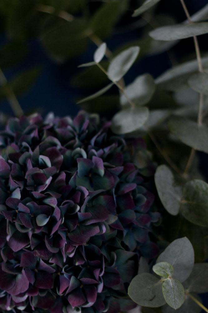 Téléchargez fond d'écran hortensia et eucalyptus pour smartphone