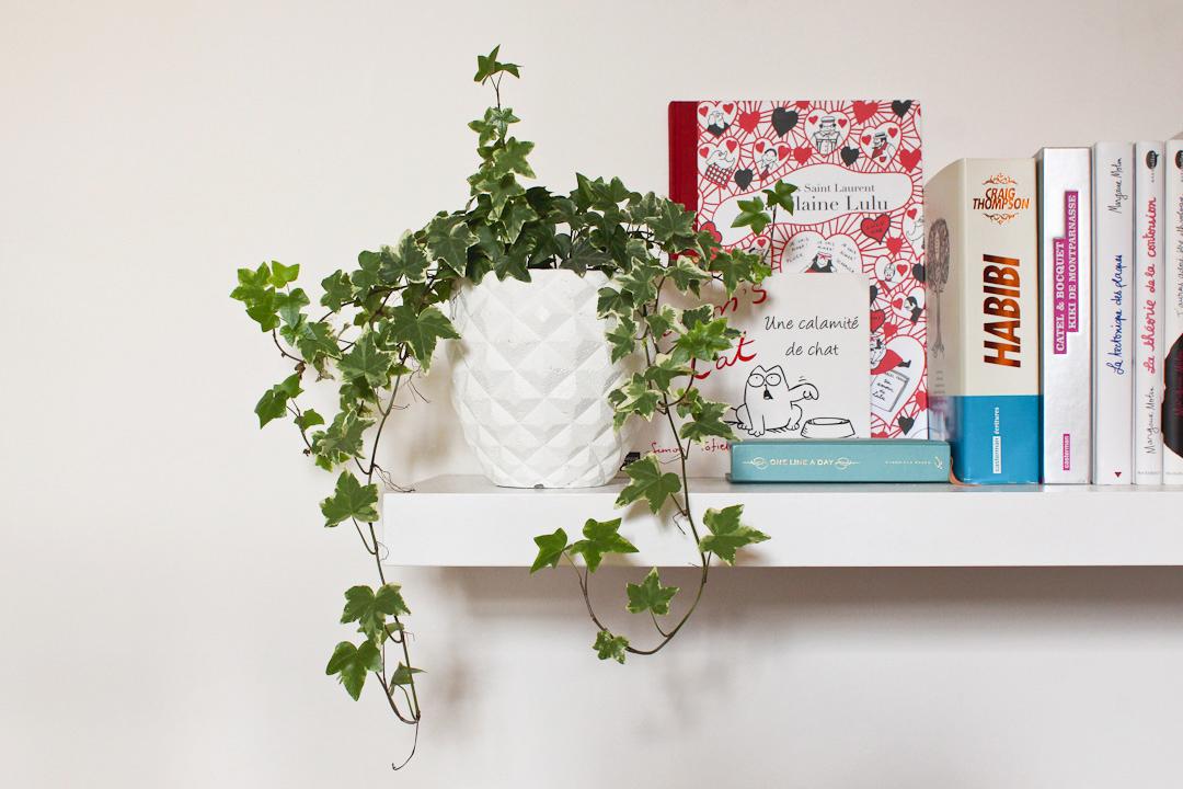 Plantes d'intérieur facile d'entretien : Lierre