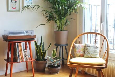 Plantes d'intérieur facile d'entretien : Sansevieria, Chrysalidocarpus et Ficus