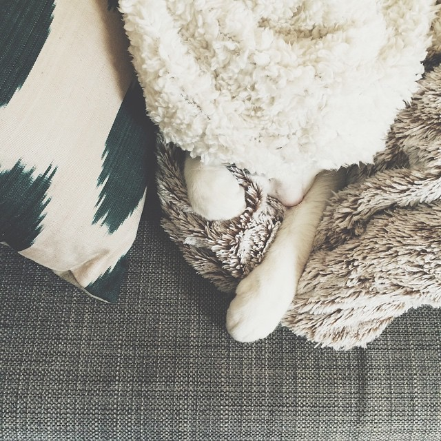 ? #sleepypancake #cat
