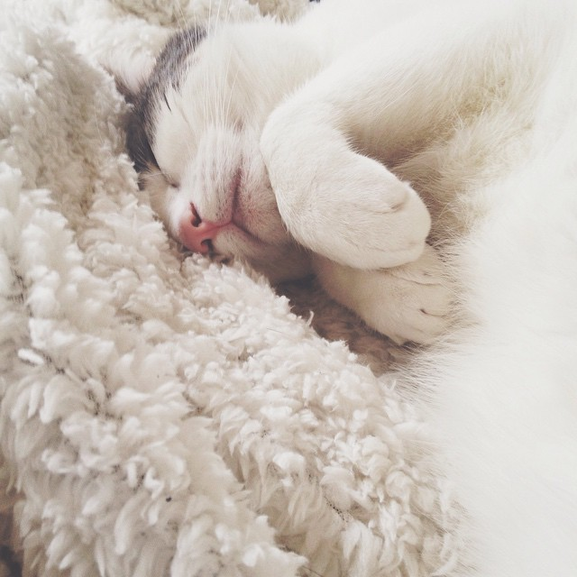 Sleeping bunny style ? #cat #sleepyhead #pancake
